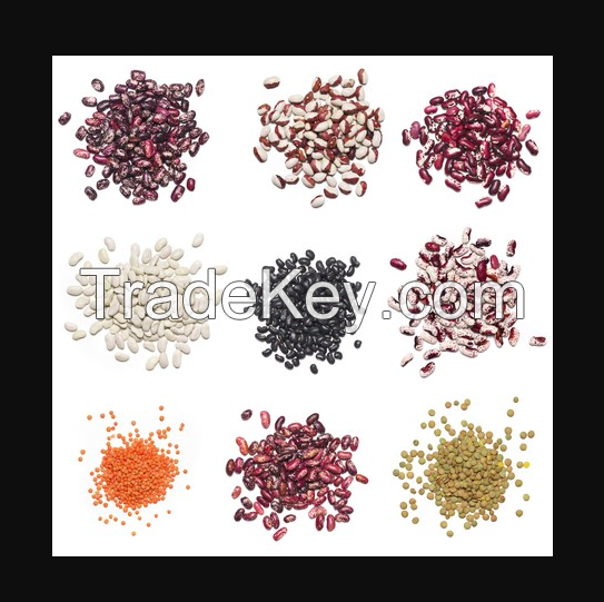 Light Speckled Kidney Beans Sugar