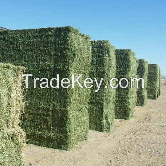 Premium Quality Best Selling Alfalfa Hay/Alfalfa Hay For Animal feeding
