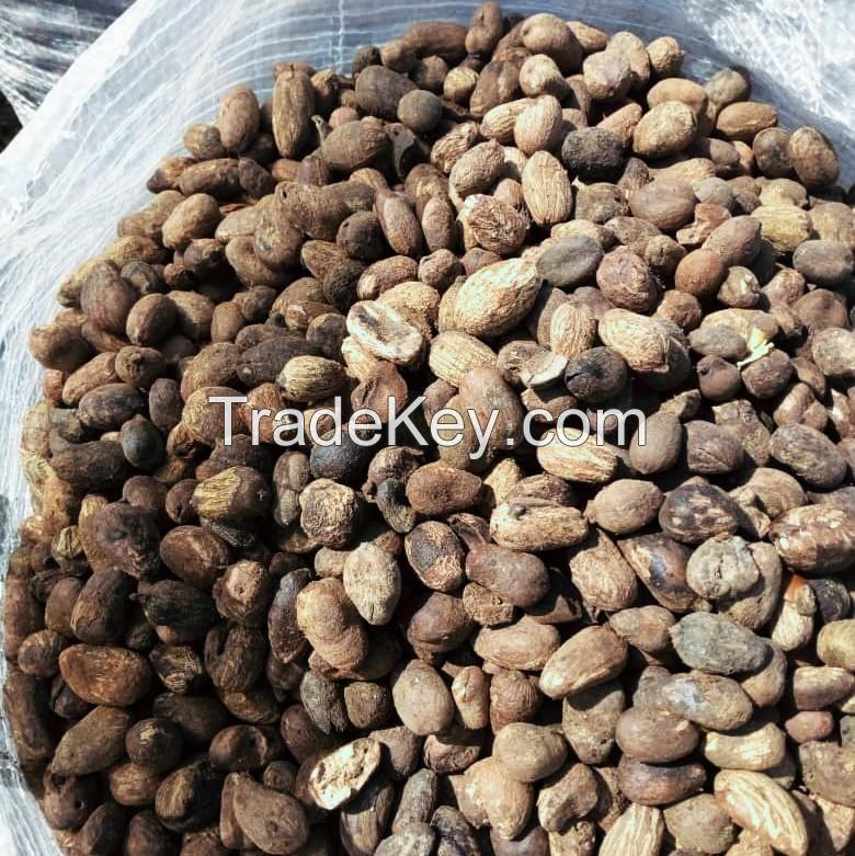SHEA NUT FROM NIGERIA