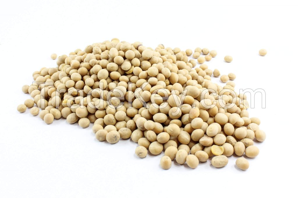 Dried Soybeans Whole sale