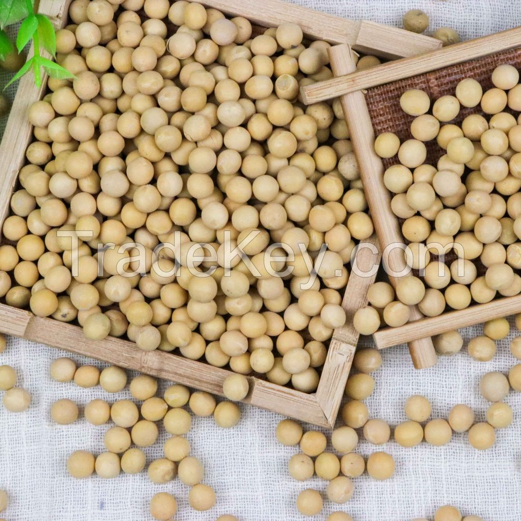 Newest organic soybeans containing several nutrients for sell