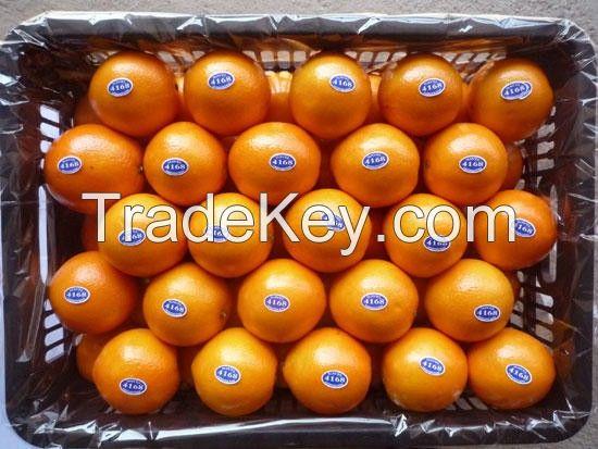 Quality Fresh Lemons / Fresh Grapes / Fresh Orange Grade A