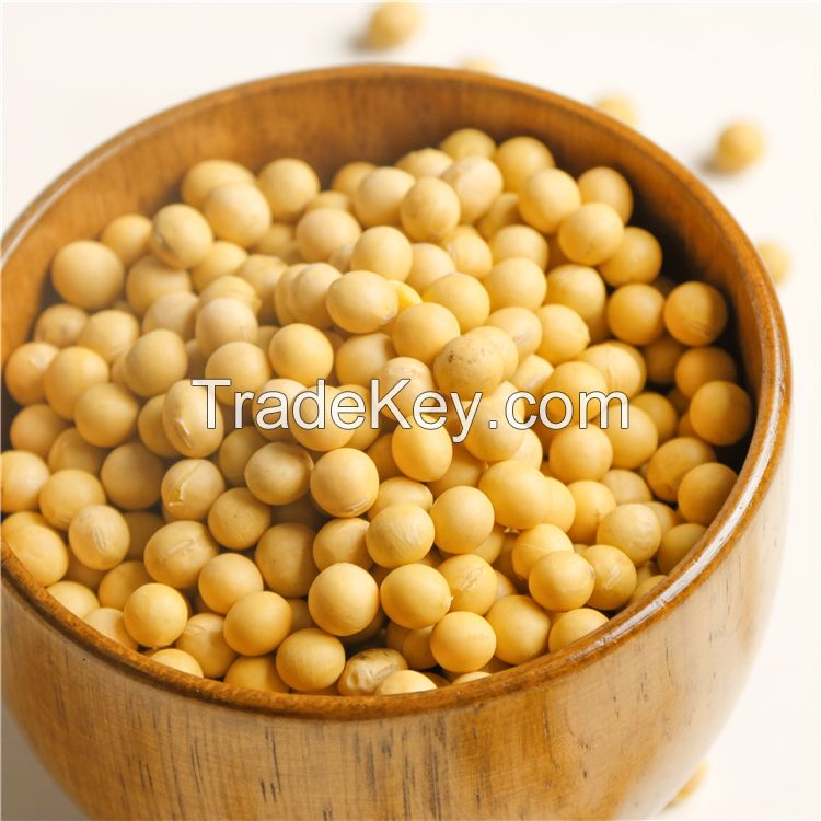 Premium Non GMO Soybeans and Soya Beans / Soy Bean Seeds for sale