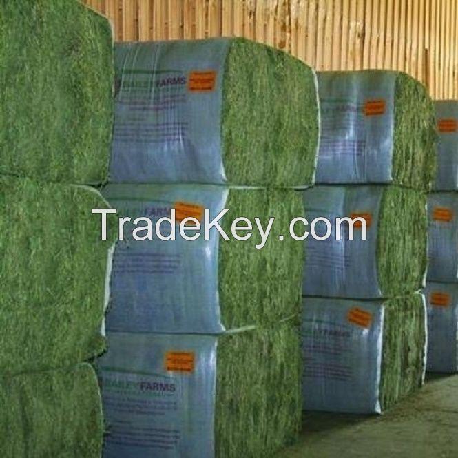 Quality Alfalfa Hay for Animal Feeding Stuff / Hay Cubes / Alfalfa Hay and Timothy Hay