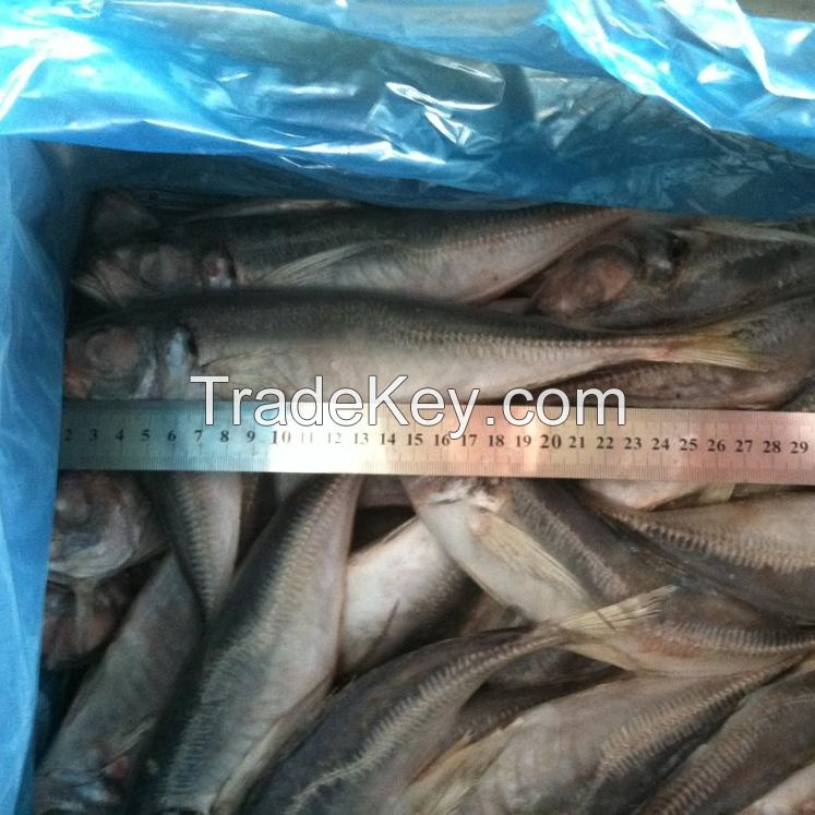 2020 Best Price Bulk Stock Whole Frozen Seafood Horse Mackerel Fish