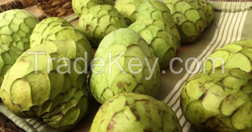 Soursop Fruit, Graviola And Cherimoya Fruit