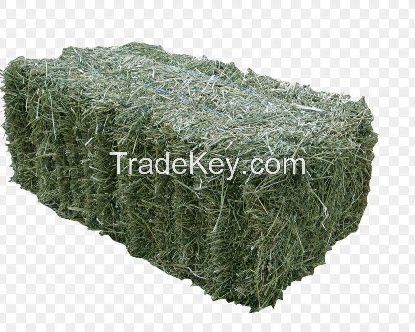 Alfalfa Hay/ Natural Alfalfa Hay Bales