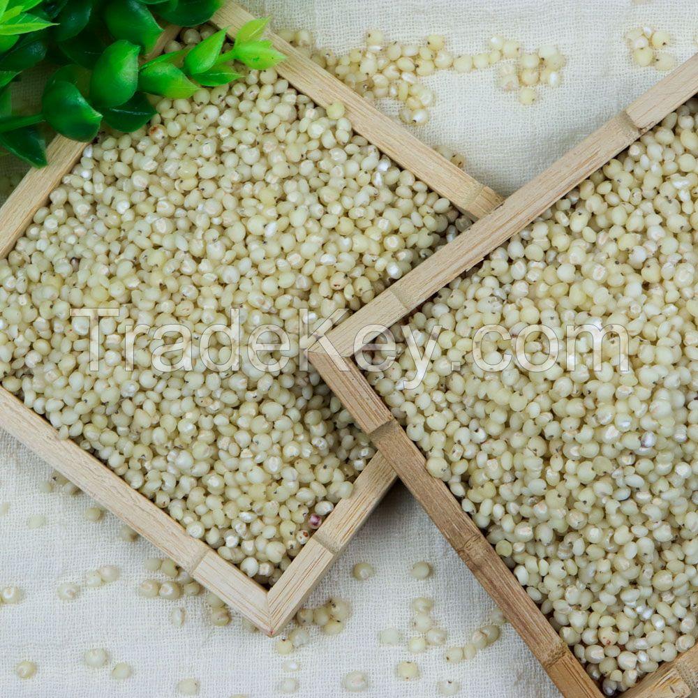 Sorghum Grains