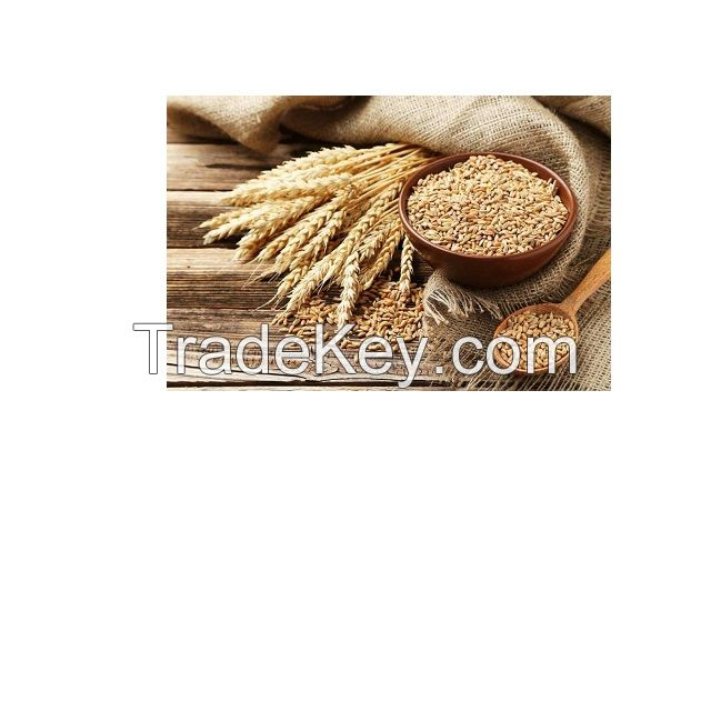 Wheat Grain in bulk / high quality wheat