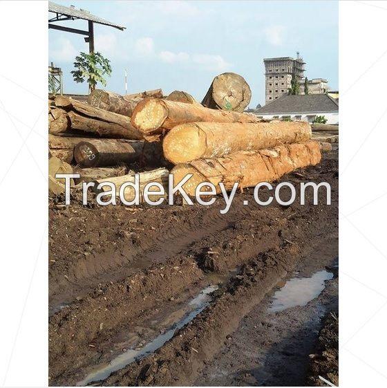 Teak Wood and Tali Wood, Padouk, Pine, Boxwood, Azobe Wood, Timber Logs