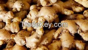 High Quality Fresh Ginger