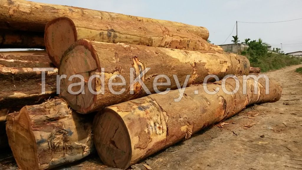 Africa hardwood for sale both in logs and lumbers