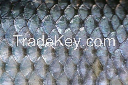 Fish Scale Ms.Selena+84906086094