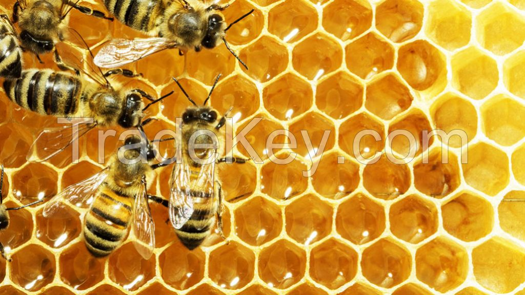 Bulk Raw Honey Freshly Harvest