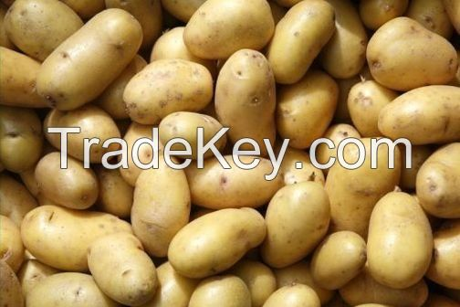 holland fresh potatoes