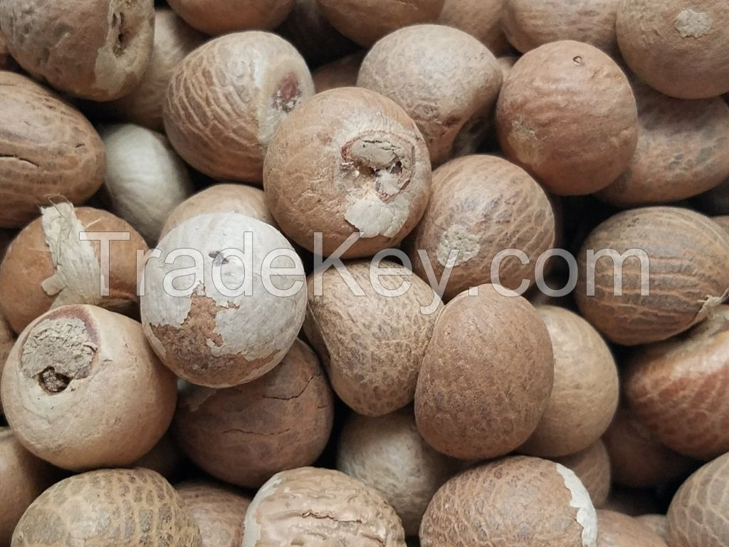 WHOLE BETEL NUT WITH HIGH QUALITY