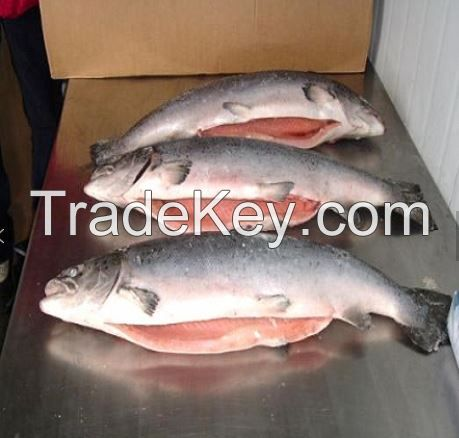 Good quality south Africa  seafood wholesale frozen Atlantic  Salmon