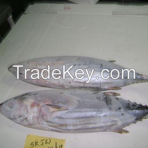 Quality Whole Round Frozen Skipjack Tuna For canned Tuna Fish