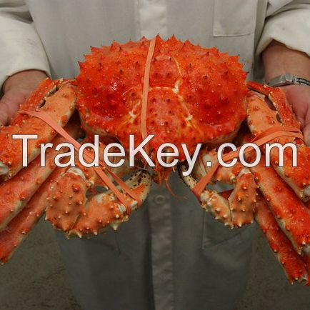 Crab ,Red King Crab ,Live and Frozen Red king crab