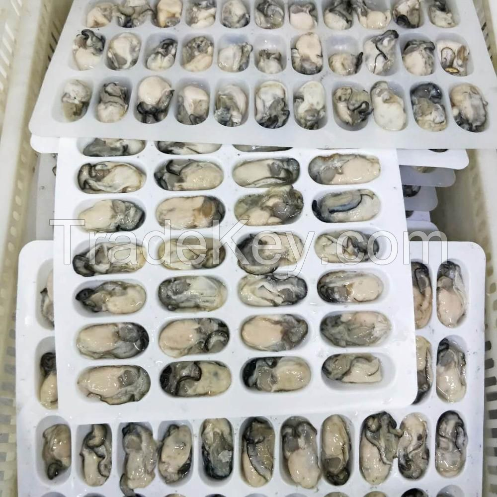 Fresh Water Pearl Oyster