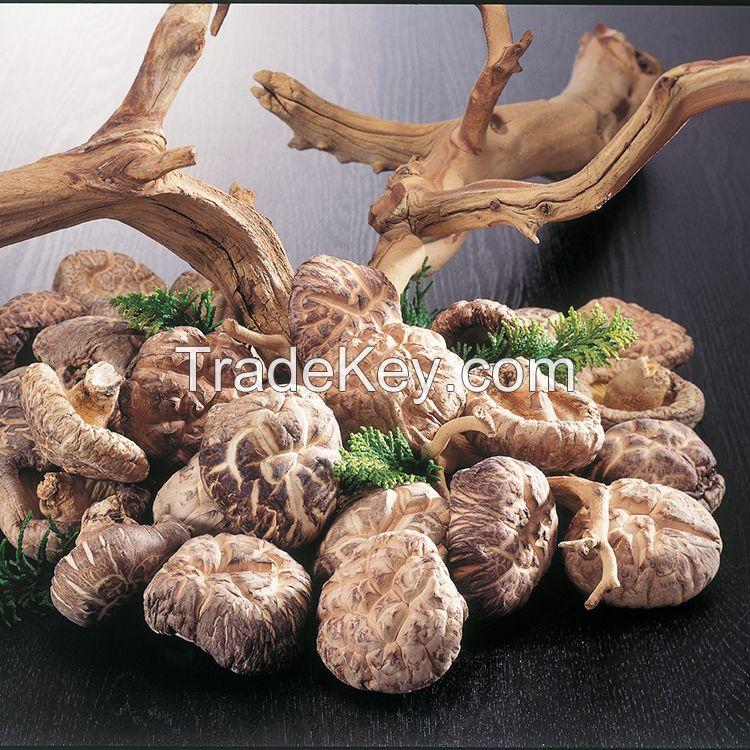 Shitake Shiitake AD Organic Dried Mushroom