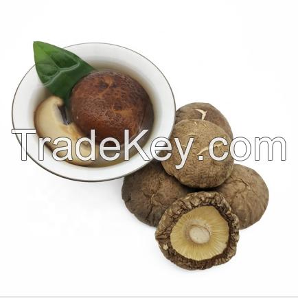 Bulk Dried Whole Magic Mushroom