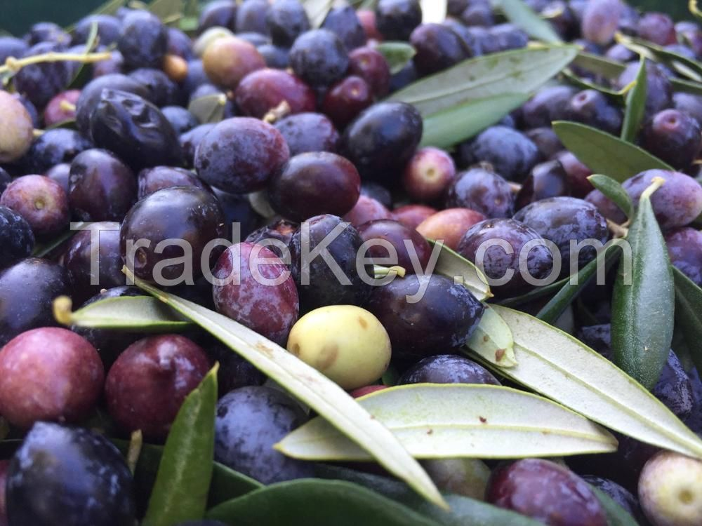 Picholine Olives