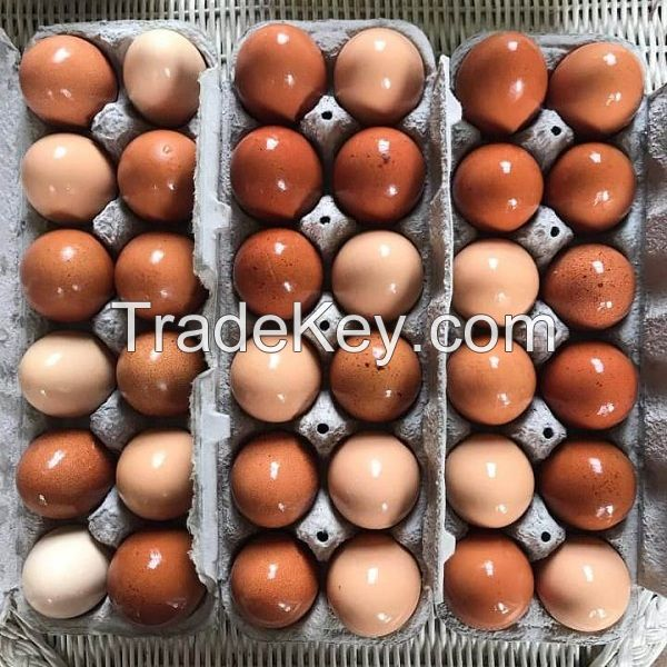 Chicken Egg/Fresh Chicken Table Eggs supplier from Ukraine and South Africa
