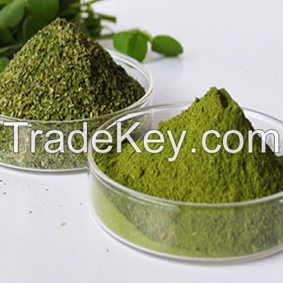 Moringa leaf power