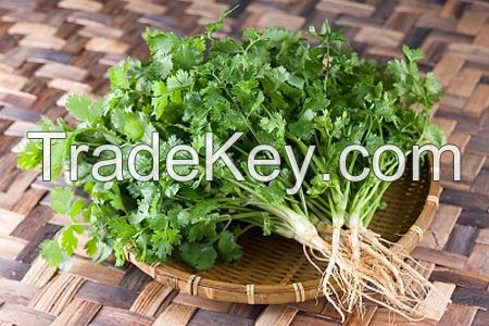 Export quality coriander seed