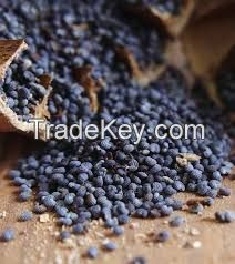 Organic Poppy Seeds cheap price