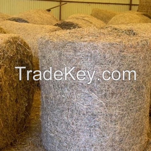 Premium Green Wheat Straw Hay Animal Feed