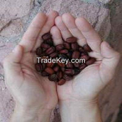 High Quality Jojoba Seeds