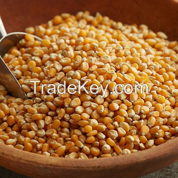 Bulk Selling Top Quality Popcorn Kernels at Low Affordable Price
