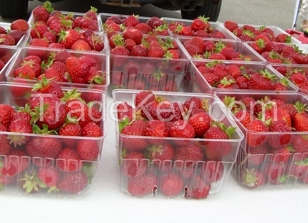 Fresh Strawberry Fruits for sale in bulk