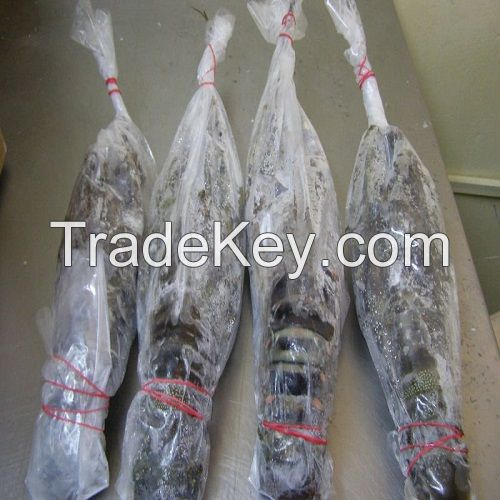 Seafood Fresh and Frozen Lobster, Lobster Tails For Sale
