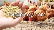 chicken feed.