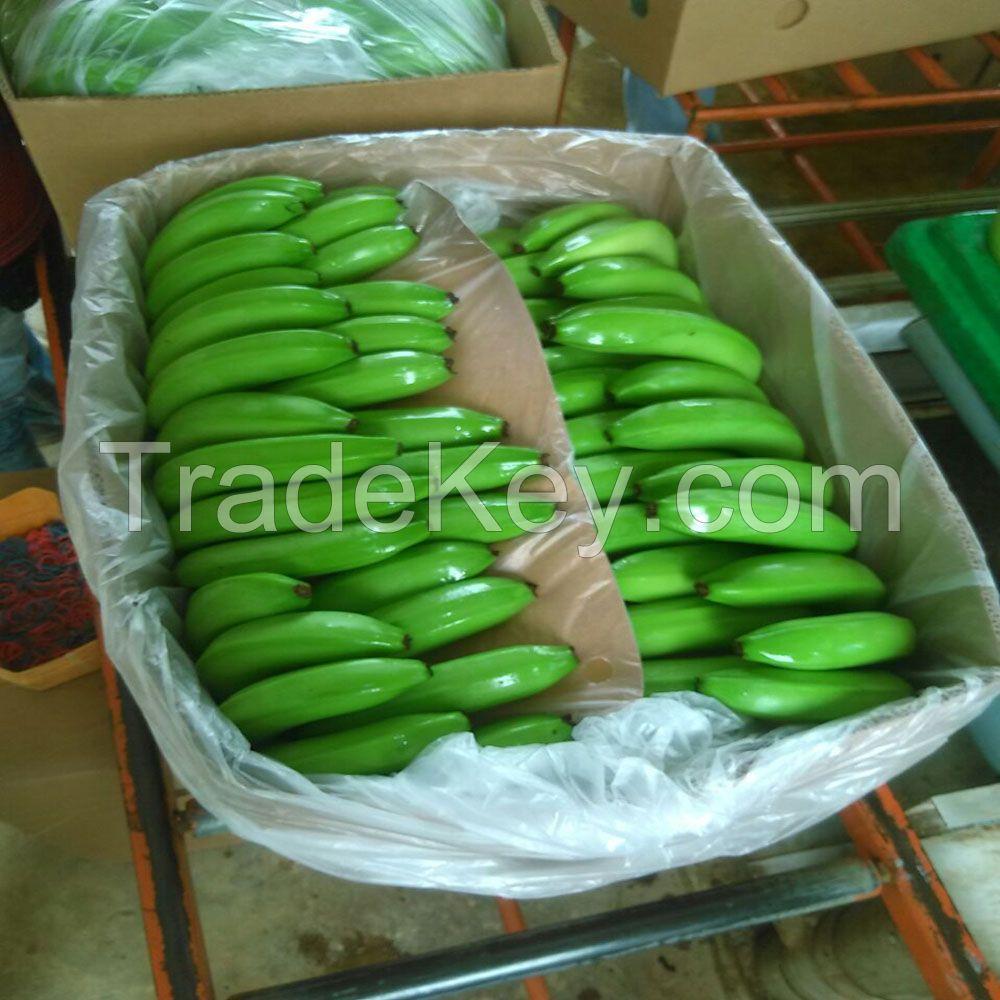 Fresh Green Cavendish Banana for sale
