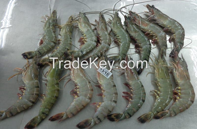 Black Tiger Shrimp for sale