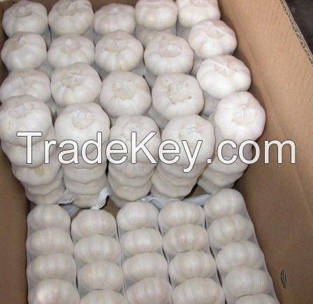 PREMIUM Garlic, fresh garlic for export