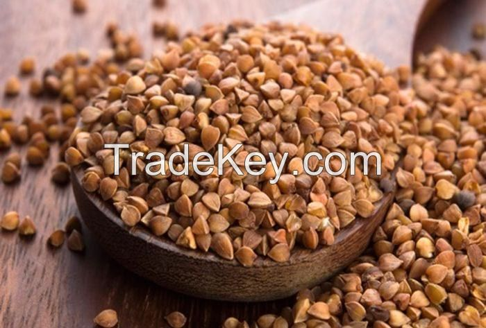 Natural Roasted Buckwheat For Sell