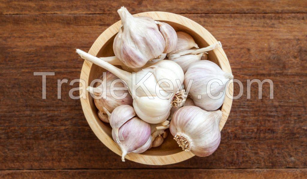 Pure Fresh White Garlic for sale