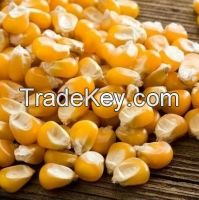 WHOLESALE WHOLE YELLOW MAIZE FOR SALE