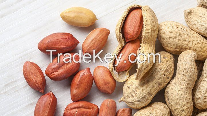 Europe Groundnut with Shell/ Europe peanut with Shell/Raw shelled peanuts