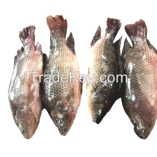 WHOLESALE FROZEN HILSA FISH