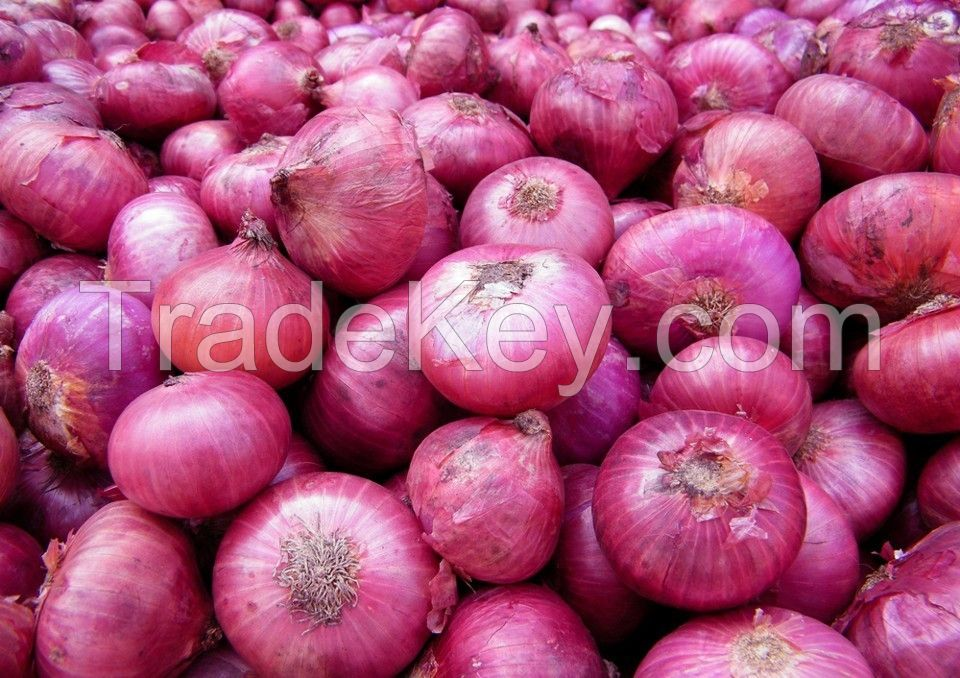 export quality red onion