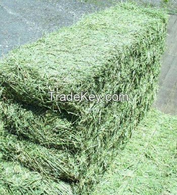 Alfafa Hay for Animal Feeding