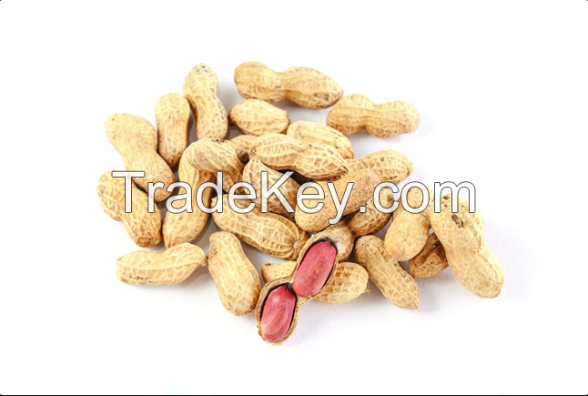 Excellent Quality Healthy Peanuts | Groundnuts
