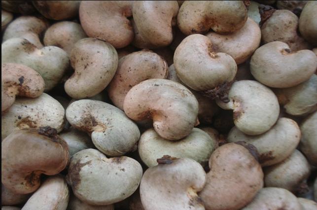Raw Cashewnuts