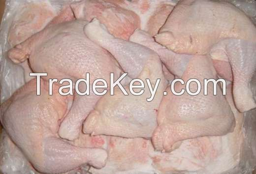 Halal frozen chicken (Whole chicen, feet, paws, breast, leg quarter, MJW, etc)